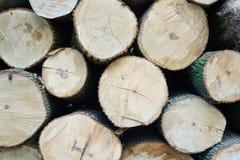 Stos rżnięci drzewni bagażniki Obrazy Royalty Free