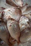 Stos ryba Obrazy Royalty Free
