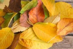 Stos spadać kolorowi jesień liście jako tło obraz stock