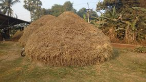 Stos suche ryżowe słoma zdjęcie stock