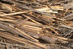 Stos surowe deski iglasty drewno Obraz Stock