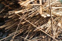 Stos surowe deski iglasty drewno Zdjęcie Stock