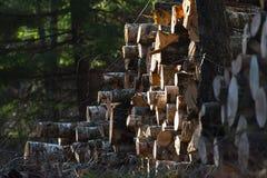 Stos szalunek w drewnach Obrazy Royalty Free