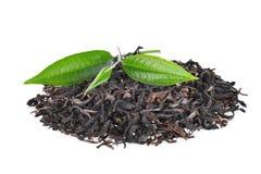 Stos wysuszona zielona herbata z świeżymi zielona herbata liśćmi odizolowywającymi Fotografia Stock