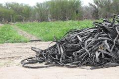 Stos zaniechane taśmy dla kapinos irygacji marniał, gotowy być odrzucający śródpolny rolniczy zdjęcia royalty free