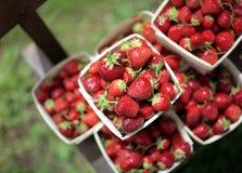 stosy berry Obrazy Stock