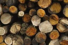 stosy drewna Zdjęcia Stock