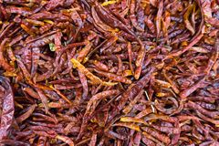 Stosy wysuszony czerwony chili fotografia stock