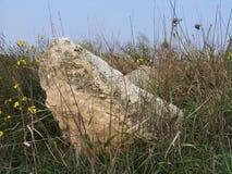 Stoune и цветок Стоковое Изображение
