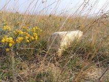 Stoune och blomma Royaltyfri Fotografi