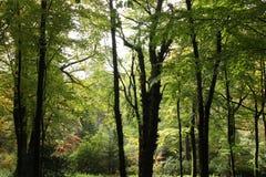 Stour英国头的森林 库存照片
