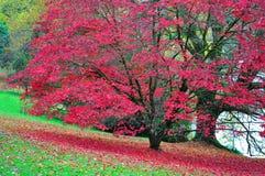 Stourhead庭院-湖和Acer -秋天颜色 库存照片