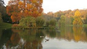 Stourhead trädgårdar, Wiltshire, England Arkivfoto
