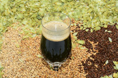 Stout in crystal glass. Crystal glass with grains and hops with stout beer Royalty Free Stock Image