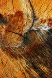 Stout trunk of birch Stock Photo
