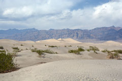 Stovepipe Wells sand dunes Royalty Free Stock Image