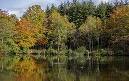 Stover湖 库存照片