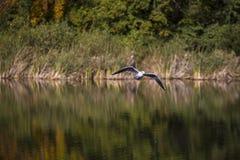 Stover jezioro Obrazy Stock