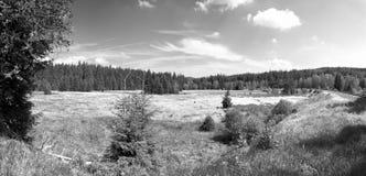 Stozec. Summer meadow near Stozec in July 2013 Royalty Free Stock Photo