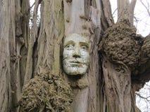 strömförande tree Royaltyfria Foton