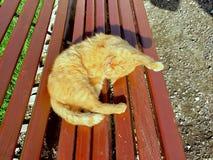 Sträckning av katten royaltyfri fotografi