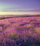 Sträckning till horisontfältet av levender blommar arkivfoto