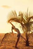 Sträckning under en palmträd Royaltyfri Fotografi