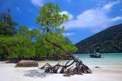 Strände und Mangroven von tropischem Meer Stockfotografie