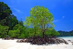 Strände und Mangroven von tropischem Meer Lizenzfreies Stockbild