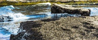Stränder efter havet stormar invaderat med alger Arkivbild