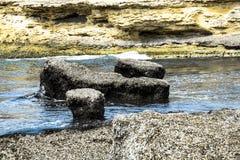 Stränder efter havet stormar invaderat med alger Arkivfoto