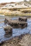 Stränder efter havet stormar invaderat med alger Fotografering för Bildbyråer