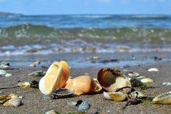 Stränderna av det Azov havet Arkivfoton