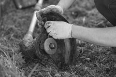 Stränga beskärarelokalvård, når du har klippt gräset, workflow Arkivfoto