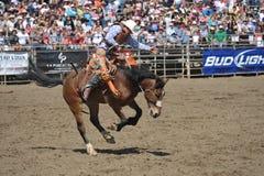 Sträubendes wildes Pferd und Cowboy Stockfotos