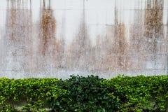 Sträuche über Schmutzwandhintergrund Stockbild