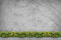 Sträuche mit konkretem Hintergrund Stockbild