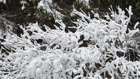 Sträuche sind schön mit Schnee schneebedeckt stockfotos
