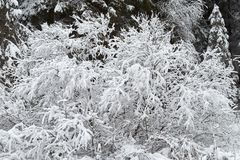 Sträuche sind schön mit Schnee schneebedeckt lizenzfreies stockbild
