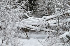 Sträuche sind schön mit Schnee schneebedeckt lizenzfreie stockbilder