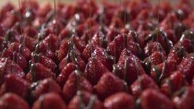Strålar av glasyr flyttar sig över jordgubbebär stock video