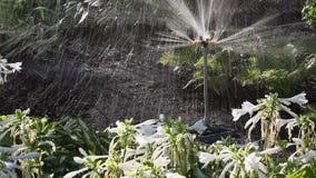 Strålar av konstgjort regn Roterande spridare på säng lager videofilmer