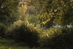 Strålar av ljus bak träden i parkerar arkivfoto