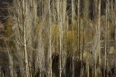 Strålar av ljus in i skogbakgrunderna skapar en mystikerkänsel Arkivfoton