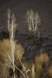 Strålar av ljus in i skogbakgrunderna skapar en mystikerkänsel Arkivbild