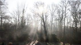 Strålar av ljus på ett vägspår till och med skogsmarkskog: solljus som filtrerar till och med kala vinterträd och mist royaltyfri fotografi