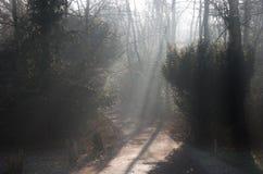Strålar av ljus på ett vägspår till och med skogsmarkskog: solljus som filtrerar till och med kala vinterträd och mist arkivbilder