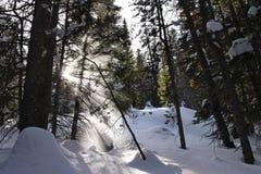 Strålar av ljussken till och med fallande snö Royaltyfria Foton