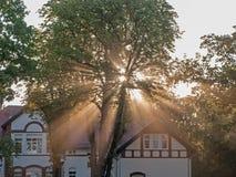 Strålar av resningsolen bland träd royaltyfri foto