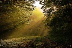 Strålar av solavbrottet till och med mörka sidor av träd i skogsumma Royaltyfri Fotografi
